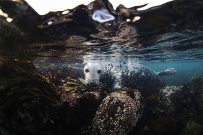 Seal on the Rocks in the Farnes Islands