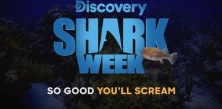 Shark Week 2019