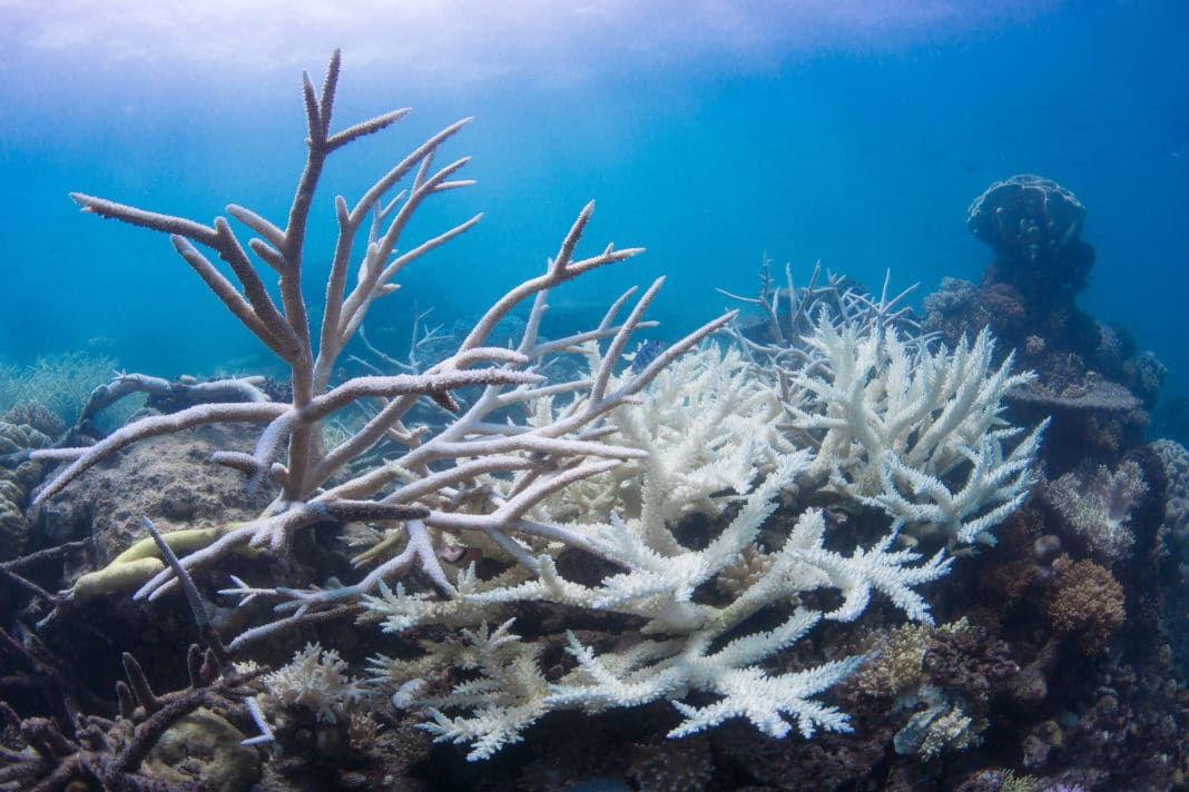 Coral bleaching on a reef