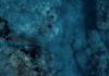 Kimi Werner Teaches Gordon Ramsay How To Spearfish