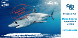 More Shark And Ray Species Granted New Global Trade Controls at Wildlife Conference