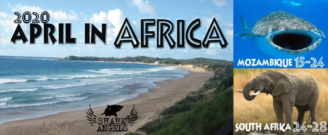 Off The Beaten Path: Africa With Shark Angels