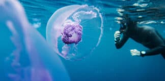 Freediver in wetsuit neoprene swim in the sea with jellyfish