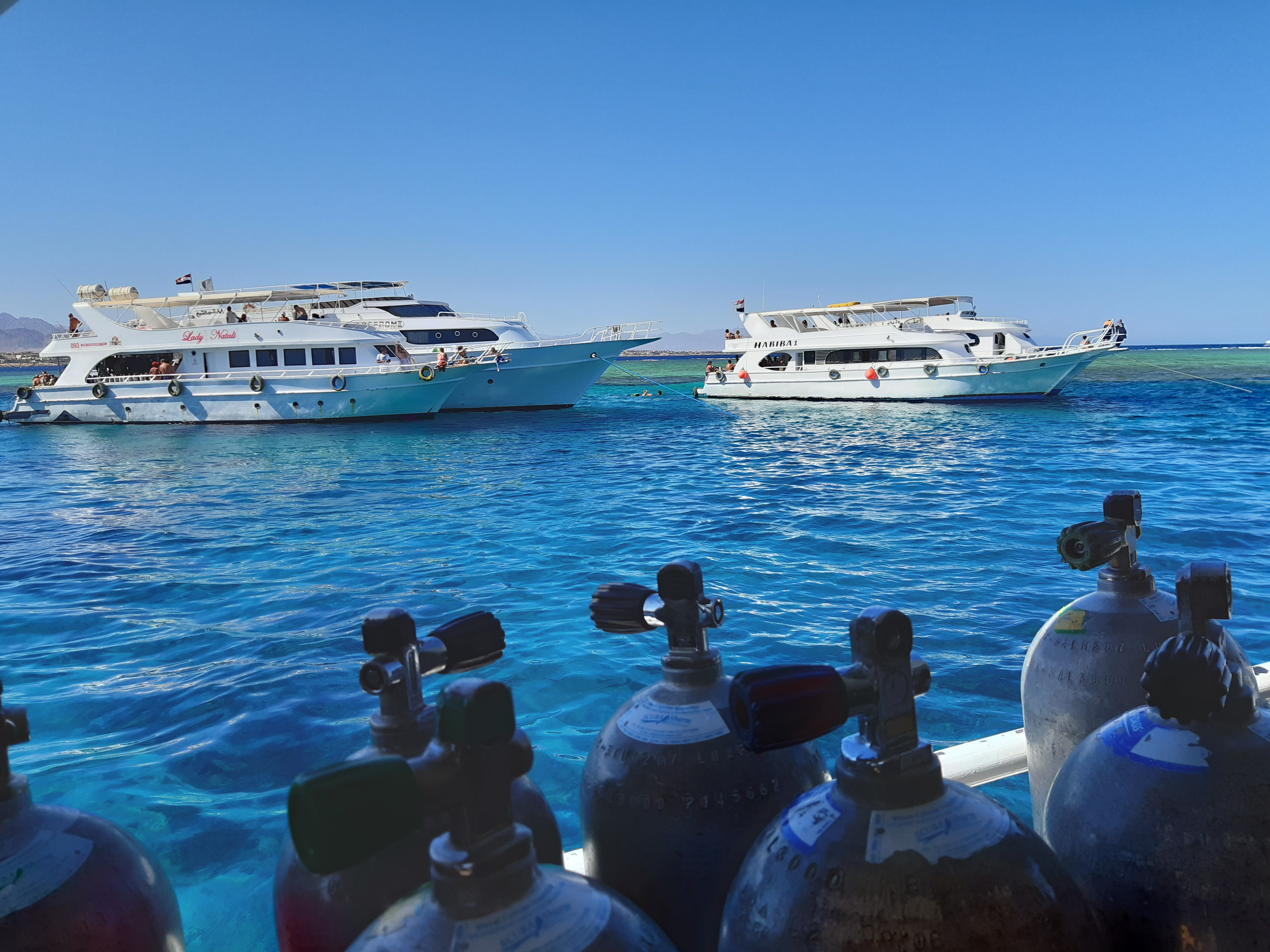 Egypt Implements Environmental Standards To Protect Its Coral Reefs