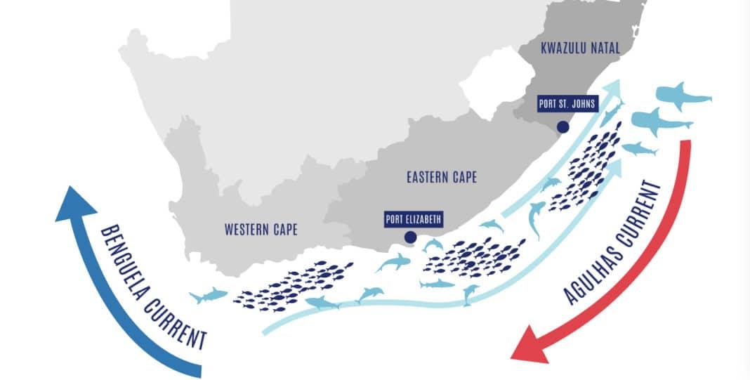 Pro Dive Port Elizabeth: Epic Sardine Run Trip