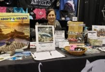 Shark Angels at DEMA Show 2019