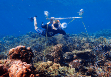 Tim Gordon deploys an underwater loudspeaker on a coral reef. Credit Harry Harding, University of Bristol.