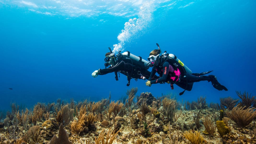 Buy A PADI eLearning Gift Pass, Help Clean The Ocean