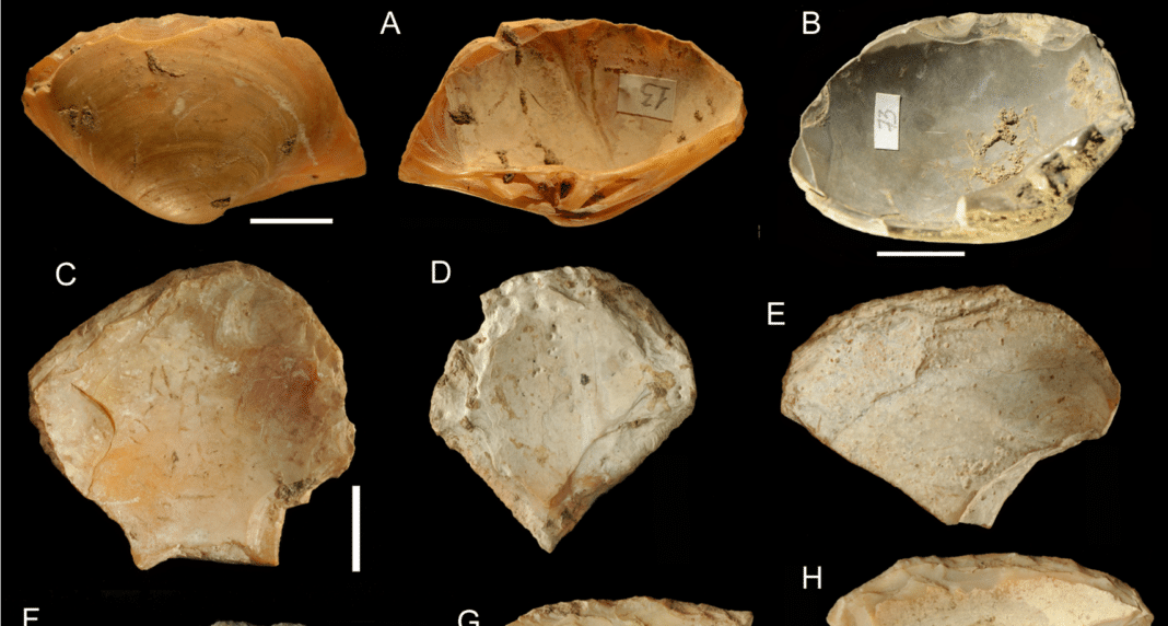 Shells collected by Neanderthal freedivers