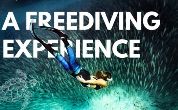 FreeDiving, Scuba Diving, Spearfishing & Diving Travel | DeeperBlue.com 4
