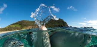 DivePhotoGuide, Wetpixel Announce Underwater Imaging Competition Winners (Photo credit: Copyright © Scott Portelli | UnderwaterCompetition.com)