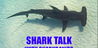 Shark Talk