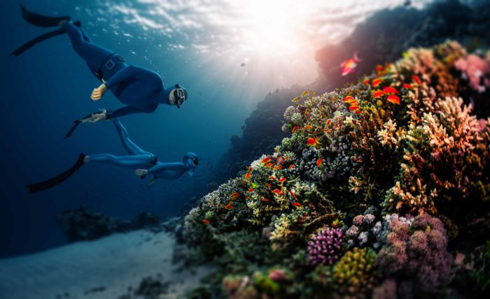 Two freedivers swim over a coral reef