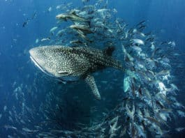 Seventh Annual United Nations World Oceans Day Photo Competition Now Accepting Submissions (Image credit: Dan Charity)