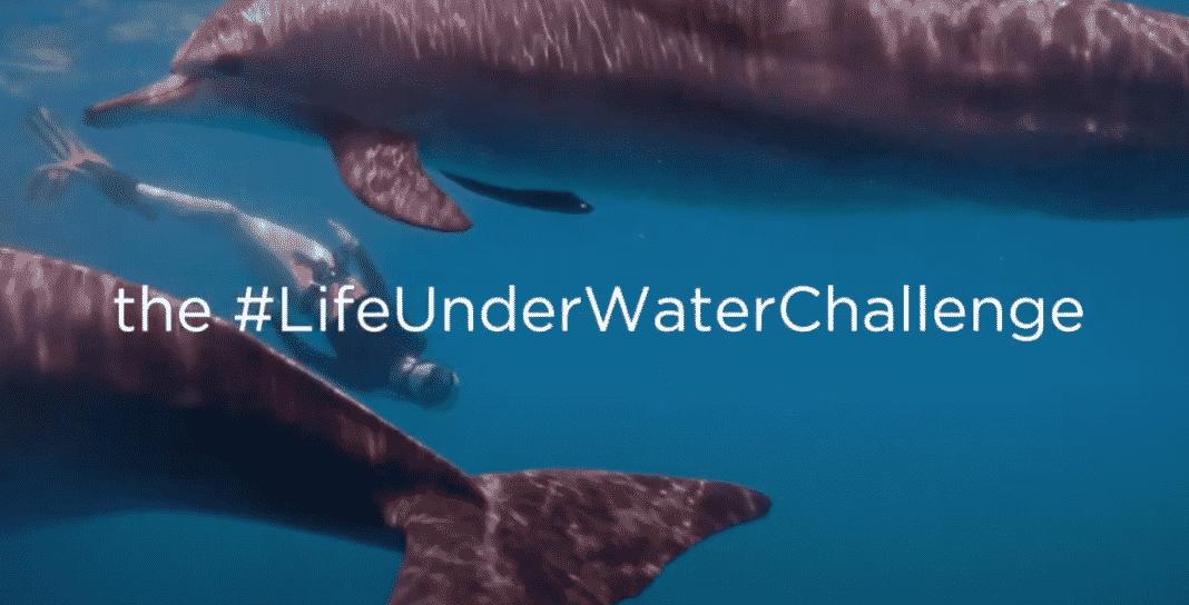 Life Underwater Photo Challenge