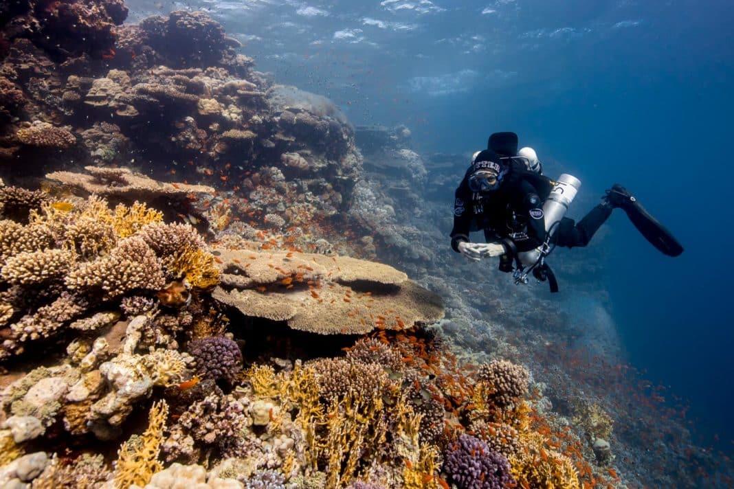 Sophie Morgan Red Sea - credit Olly Scholey