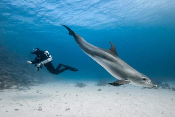 Sophie Morgan Red Sea. Photo Credit Olly Scholey