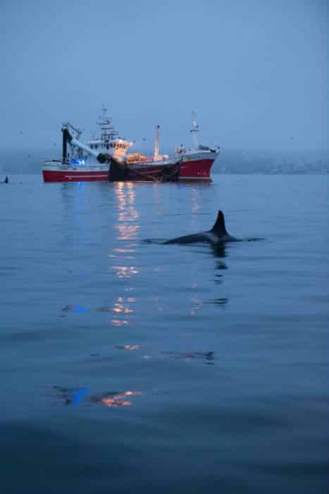 Hostile Planet Orca. Photo Credit National Geographic Channel, Dan Beecham