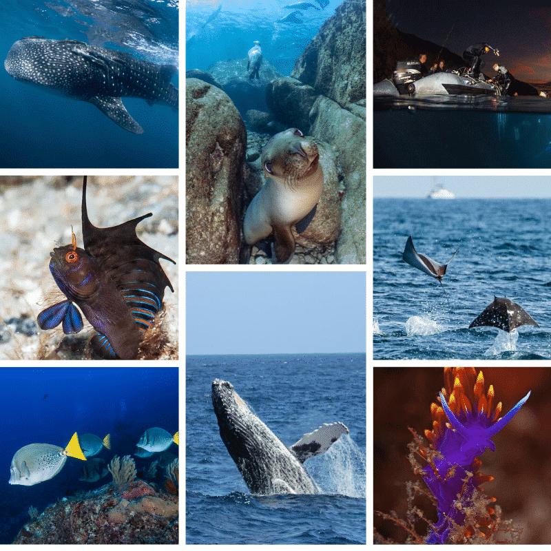 Sea Of Cortez Critters