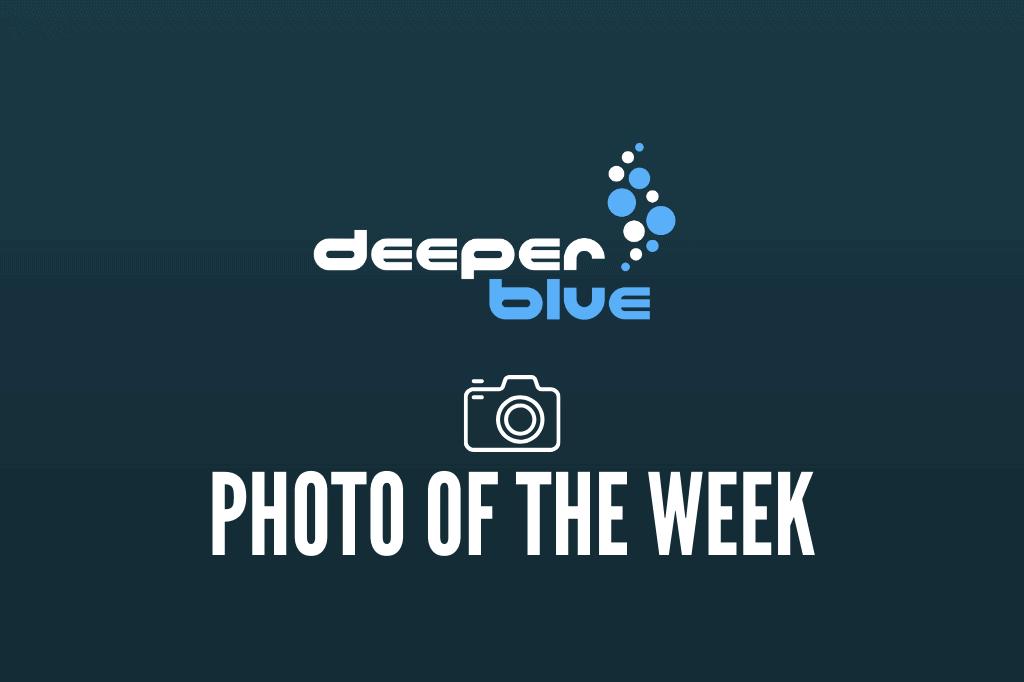 DeeperBlue.com - Photo of the Week - 2020