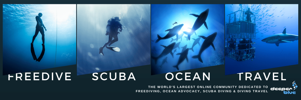 The world's largest online community dedicated to FreeDiving, Ocean Advocacy, Scuba Diving & Diving Travel