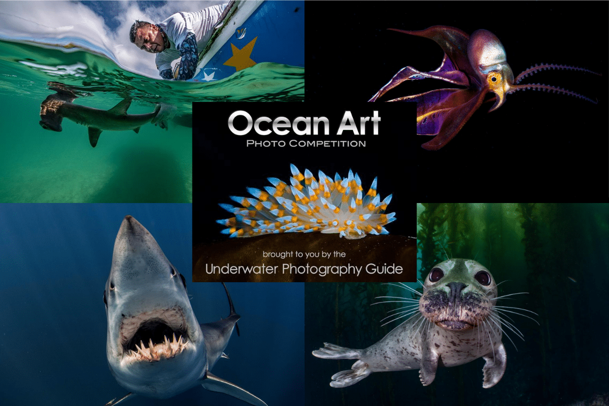 The Winners Of The 2020 Ocean Art Contest Have Been Announced