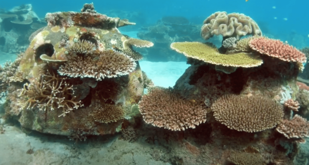 Memorial Reefs International