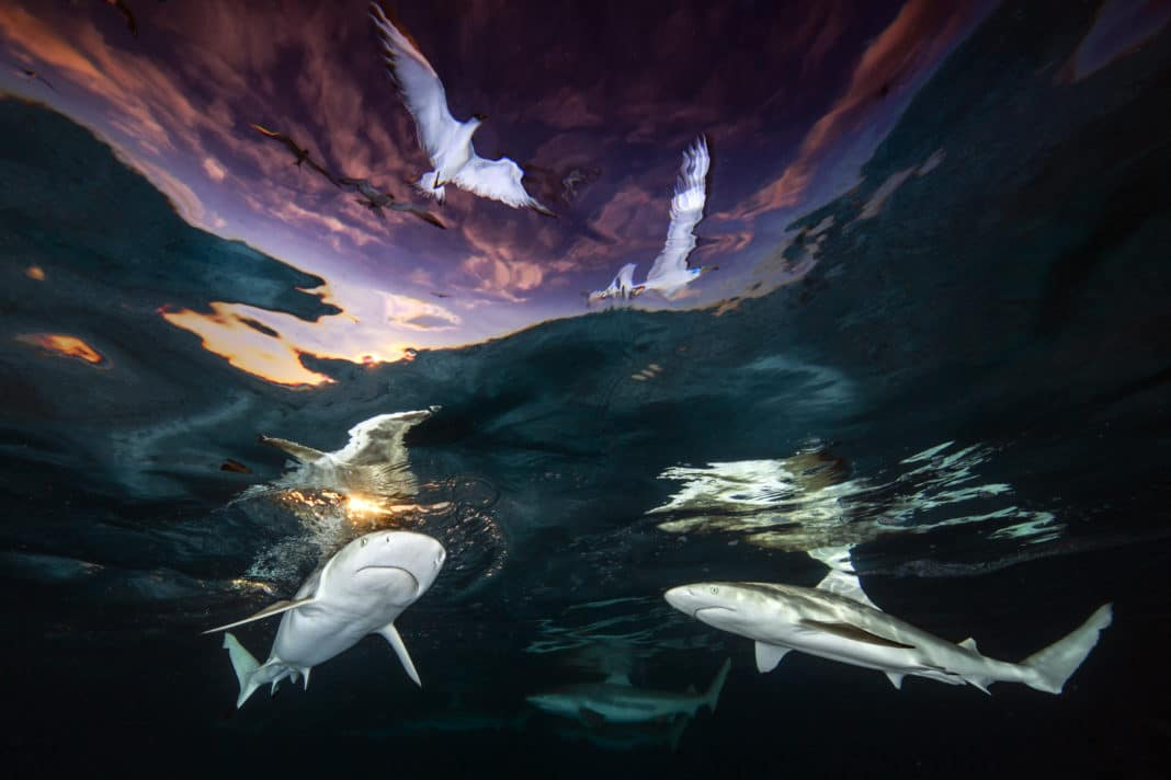Renee Capozzola Wins 2021 Underwater Photographer of the Year Prize 2