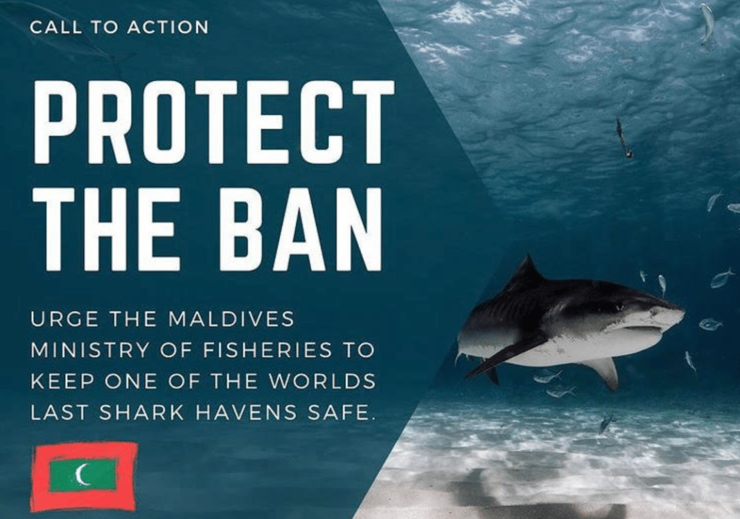 Activists Want The Maldives To Keep Its Prohibition On Shark Killing
