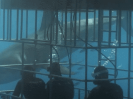 Nautilus Liveaboards Introduces New Shark Cages