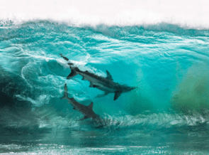 Submission Deadline For Ocean Photography Awards Ends July 31st thumbnail